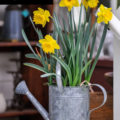 Flower Bulbs in Fall for an Easter Centerpiece