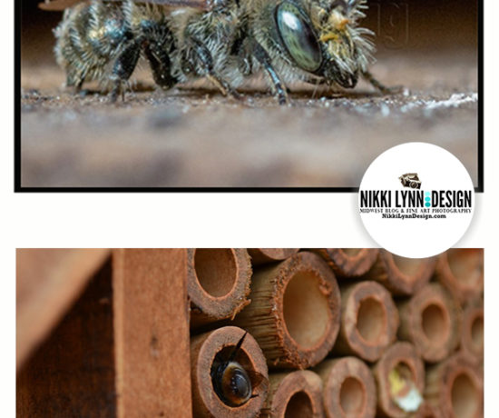 All about the Mason Bee