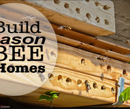 Attract Mason bees by building homes simple DIY garden project