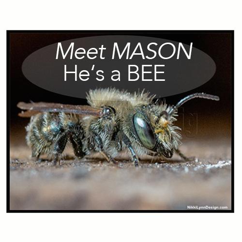 Meet Mason He's a Bee