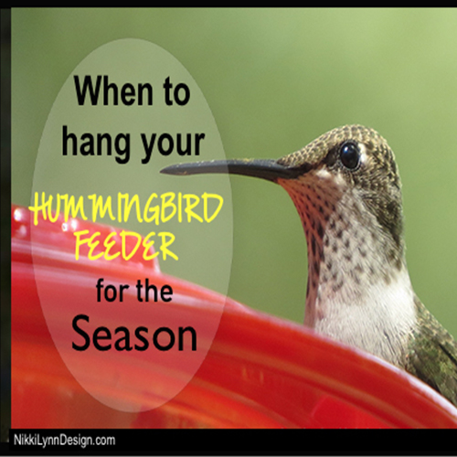 When Do the Hummingbirds Come Back