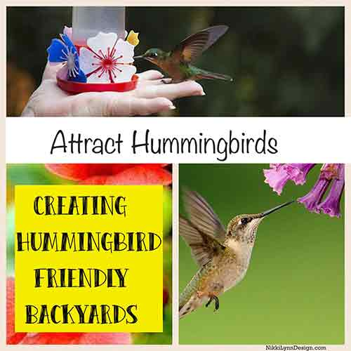 Making Your Yard Hummingbird Pleasant