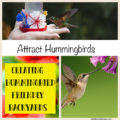 Making Your Yard Hummingbird Pleasant  How can you get hummingbirds to visit your yard year after year?  It's not as difficult as one might imagine. If you provide your feathered friends with a reliable food source they will come back at visit you throughout the years.