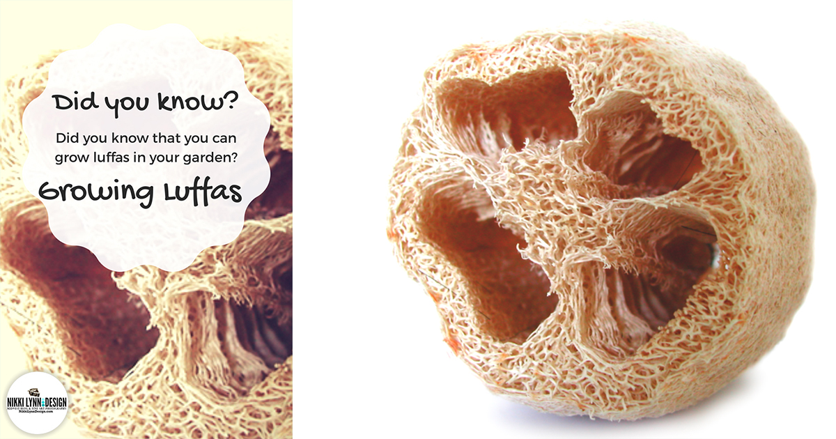 Growing Loofah Sponges in Your Garden