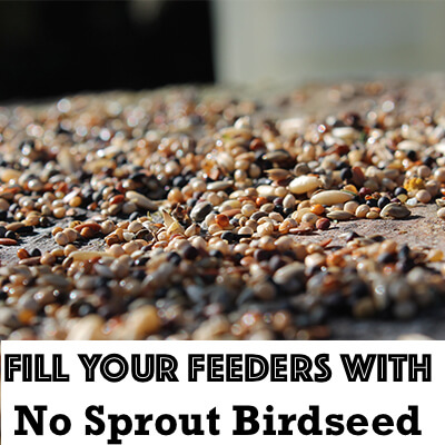 Show of hands. How many of you have weed sprouts under your bird feeders right now? I used to! Until I learned this no sprout bird seed secret.