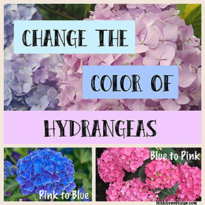 Change the Color of Hydrangeas
