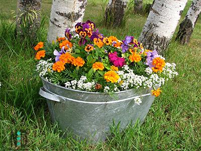 Old Wash Tub Flower Pots