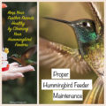 How To Clean A Hummingbird Feeder - Reduce the chance of passing on harmful bacteria through growth of seen, or unseen bacteria that is harmful to birds.