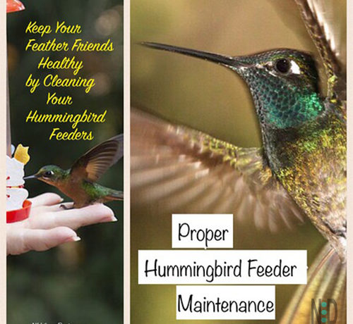 How To Clean A Hummingbird Feeder