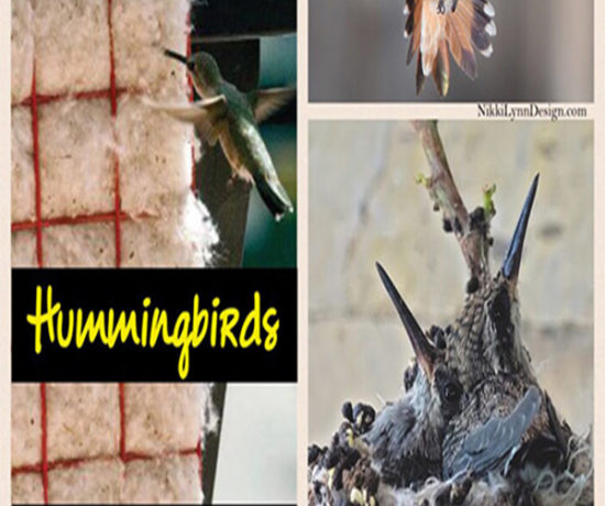 How to Get Hummingbirds to Nest in Your Yard