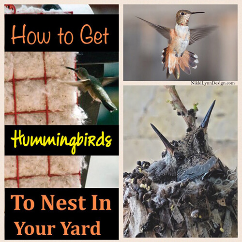 How to Get Hummingbirds to Nest by You - If you would like to see more hummingbirds around your yard you need to provide two sources, food and nesting materials.