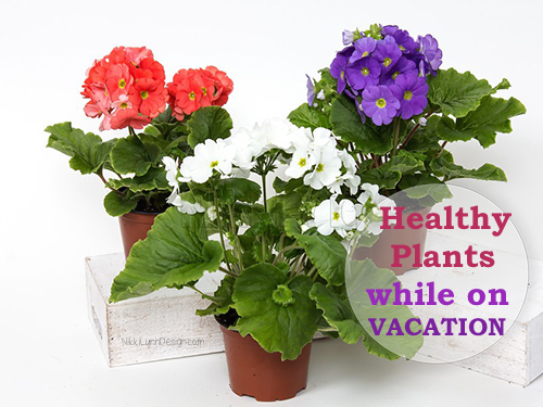 How To Care For Houseplants When You Go On Vacation - Bathe and bag process. Healthy plants when you return home.