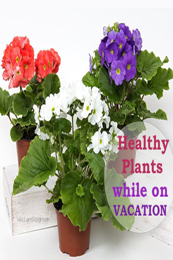 How To Care For Houseplants When You Go On Vacation