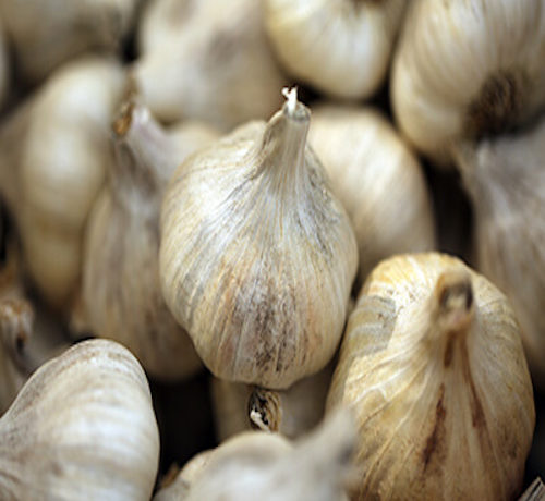Planting Garlic Video
