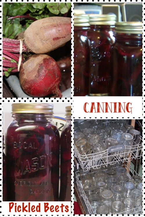 Pickled Beets Canning and Preserving