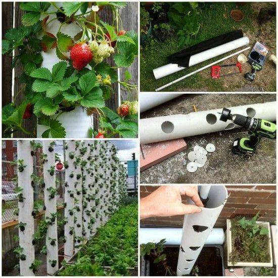 This vertical garden uses PVC pipe to make a unique strawberry garden. I like the fact that the PVC will last for years.