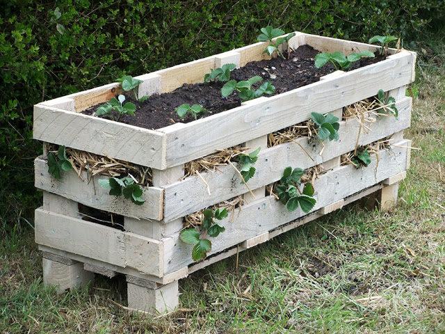 Strawberry Pallet Garden Box