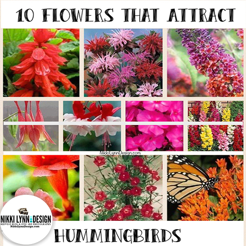 0 Flowers That Attract Hummingbirds
