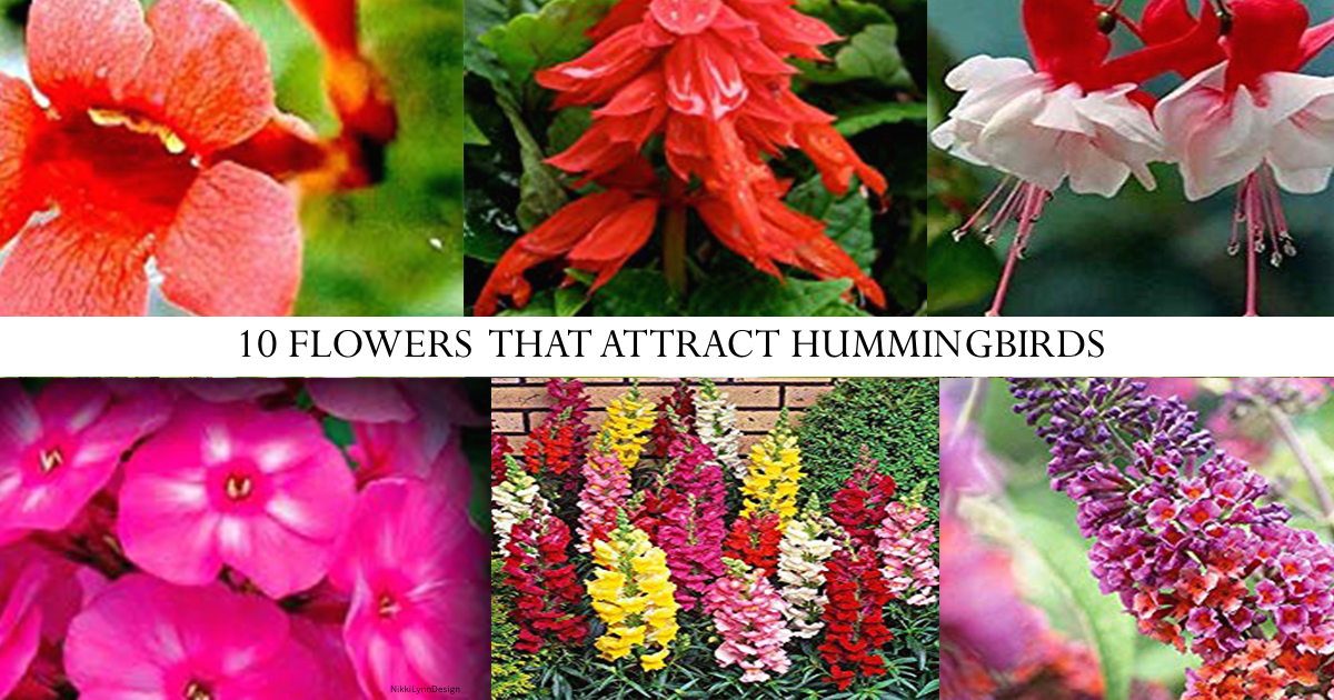 10 Wildflowers that Attract Birds to Your Yard and Hummingbirds