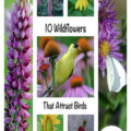 10 Wildflowers That Attract Birds to Your Yard If you want to attract birds to your yard and also would like to add a splash of color with flowers, might I suggest the best of both worlds? Wildflowers are native to the United States. They are easy to grow in most soils. They are beautiful and birds like chickadees, bluebirds, nuthatches, cardinals, blue jays, titmice, orioles and a whole slew of additional birds will visit them during the growing season.