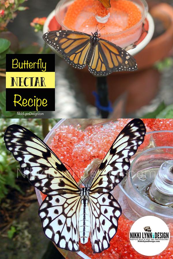 Butterfly Nectar Recipe Feeding Butterflies