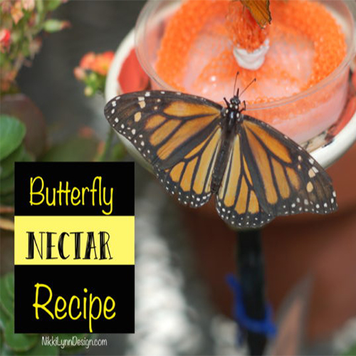 Butterfly Nectar Recipe