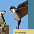 The Tree Swallows Have Arrived