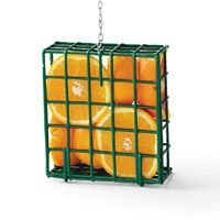 Suet Feeder Filled With Orange Halves