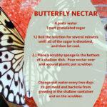Butterfly Nectar Recipe