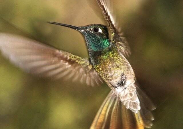 Wisconsin Birds Photography