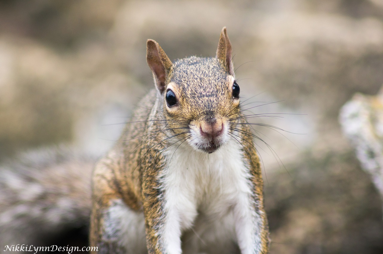 How to stop squirrels digging up fall bulbs