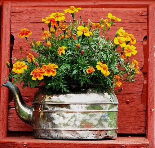 Old Tea Kettle Makes a Bold Statement as a Planter