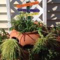 dilly dally herb garden pot