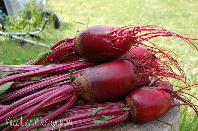 Beets from Garden