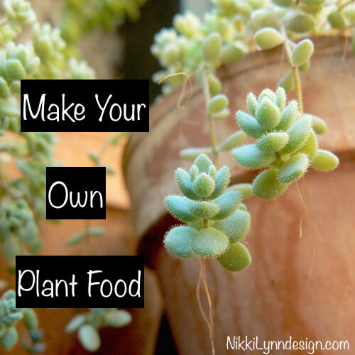 Make Your Own Houseplant Food
