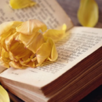 Flower and Bible Photography Print