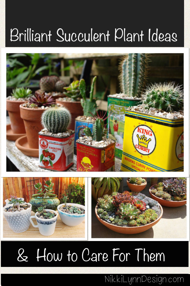 Succulent Planter Ideas and Care