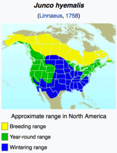 Dark Eyed Juncos in North America