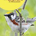 Warbler Season in Wisconsin