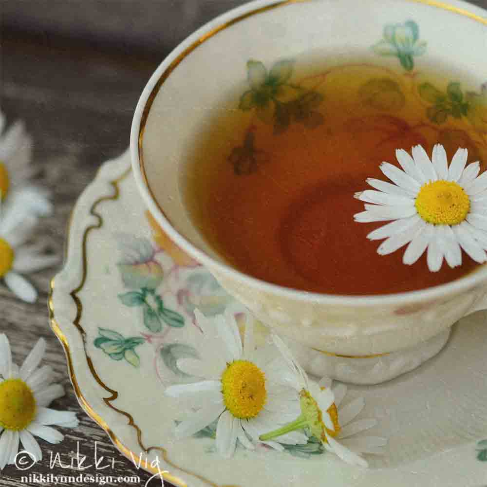 Chamomile Tea Using Flowers - Using some of my garden chamomile flower to sit and reflect while enjoying a cup of chamomile tea.