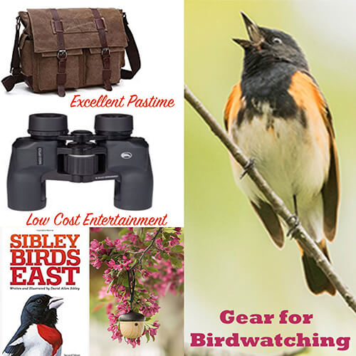 Gear for Birdwatching