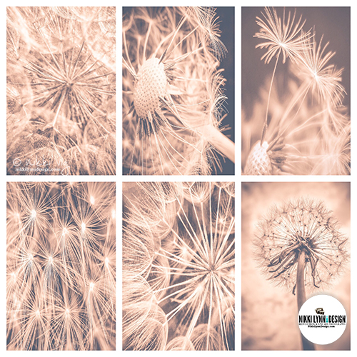 Soft Fairytale Pink Dandelion Wall Art Prints