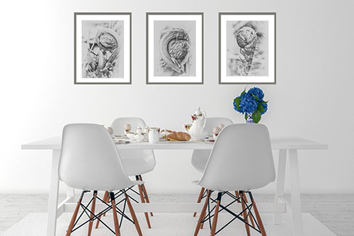Uncurling Woodland Fern Prints in Black and White Wall Art Prints
