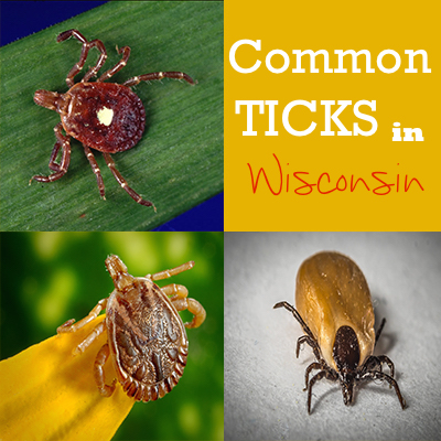 Preventing Tick Bites and Embeddings I Nikkilynndesign