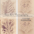 Growing Inspiration Fine Art Photography Leaf Wall Art