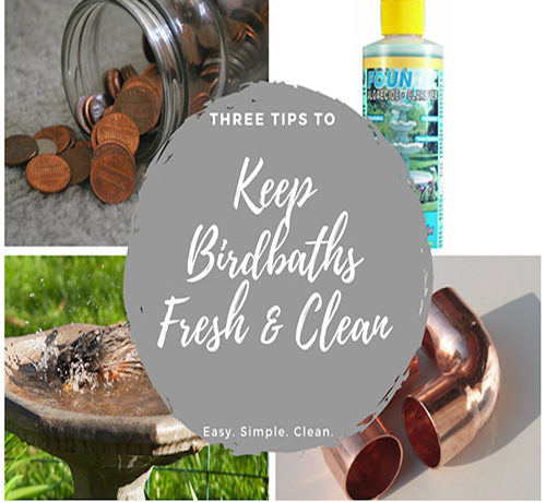Keep Birdbaths Fresh and Clean