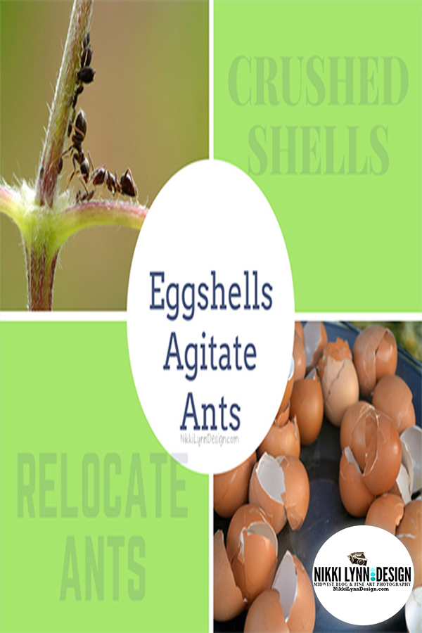 Organic Way to Get Rid of Ants on Plants - Eggshells Agitate Ants