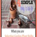 Selecting Garden Plant Bulbs