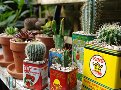 Succulents Planted in Old Kitchen Tin