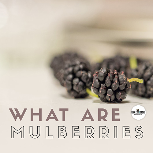 What are Mulberries